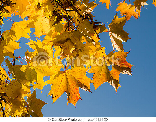 Autumn yellow leaves on blue sky background - csp4985820