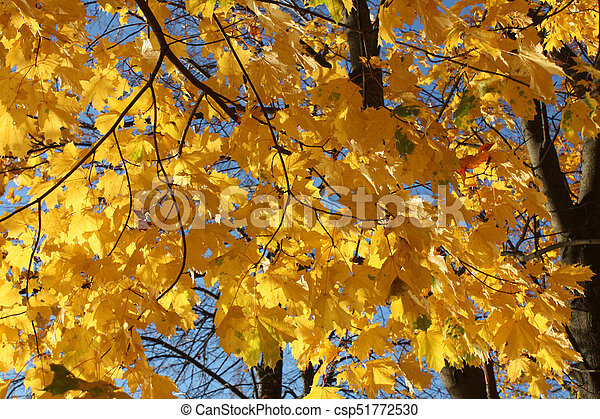 autumn. yellow leaves, on blue sky background - csp51772530