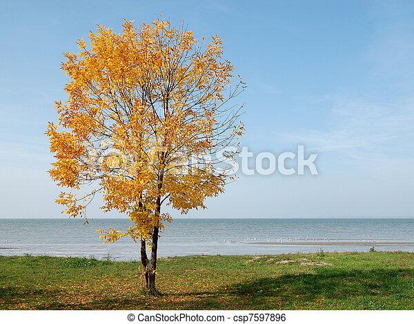 Autumn yellow tree at seaside on blue sky background - csp7597896