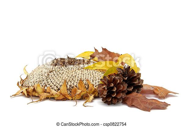 Autumnal leaves arragement - csp0822754