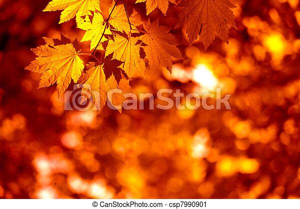 Autumnal leaves - csp7990901