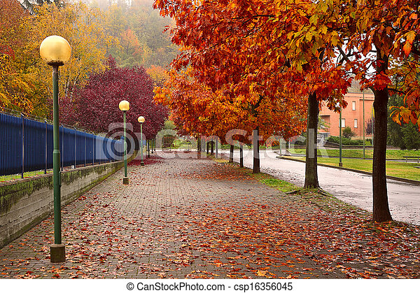 autumnal trees along sidewalk in alba italy trees with colorful
