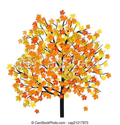 autunno, albero acero - csp21217973