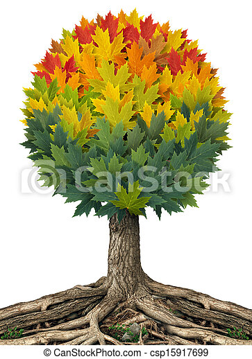 autunno, albero - csp15917699