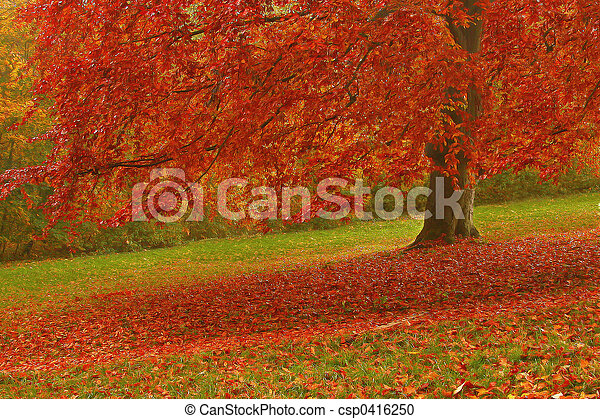 autunno - csp0416250