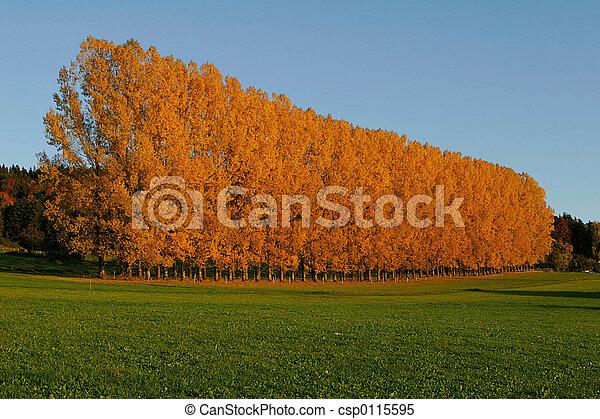autunno - csp0115595