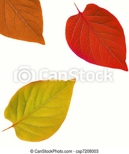 autunno, astratto, foglia, cornice - csp7208003