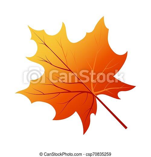 autunno, foglia albero - csp70835259