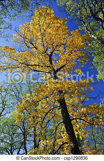 autunno, grande, parco, albero, cadere - csp1290836