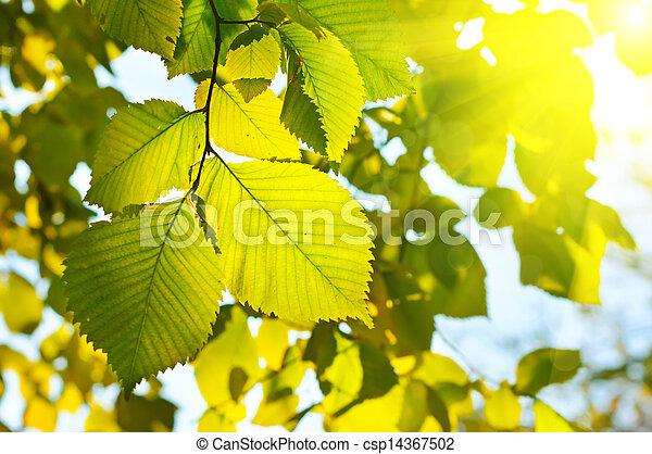 autunno, stagionale, carta da parati - csp14367502