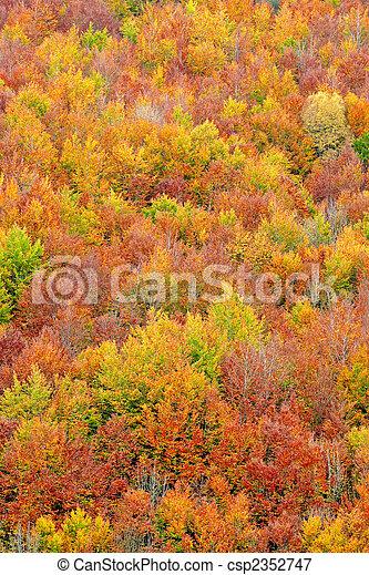 autunno, stagione, colori, cadere - csp2352747