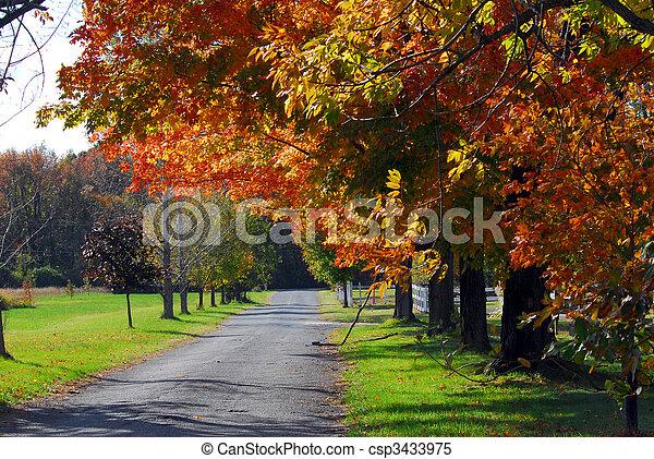 autunno, strada paese, paesaggio, albero - csp3433975
