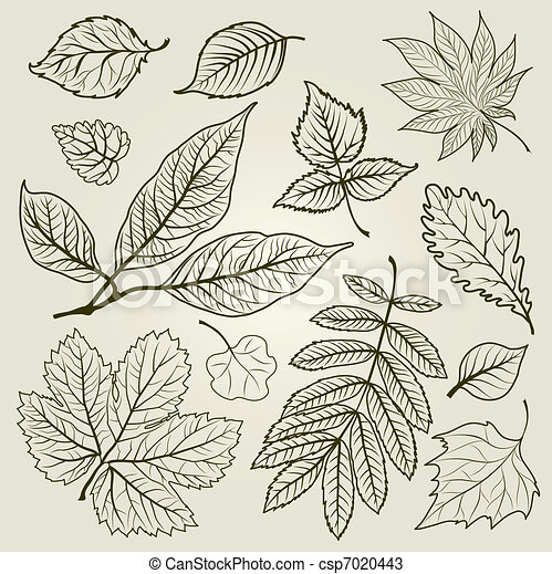 autunno, vettore, set, mette foglie - csp7020443