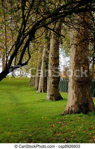 Avenida de árboles - csp8926603
