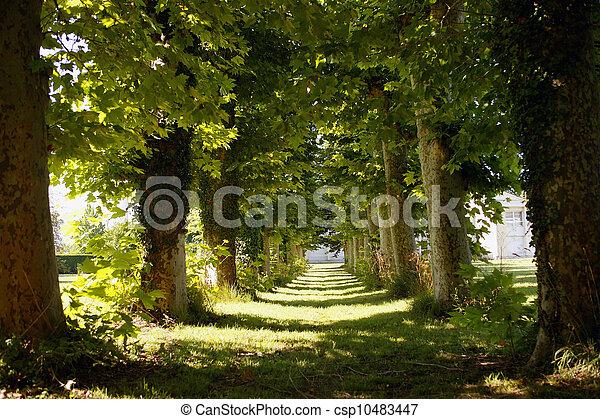Avenida de árboles - csp10483447