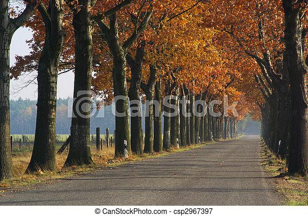 avenue in fall 01 - csp2967397