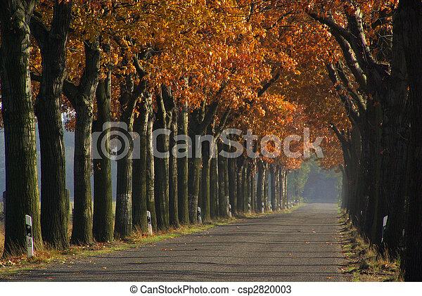 avenue in fall 02 - csp2820003