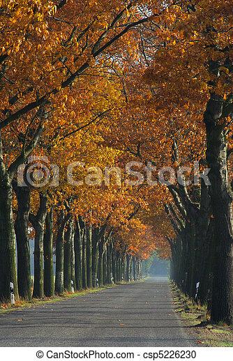 avenue in fall 04 - csp5226230