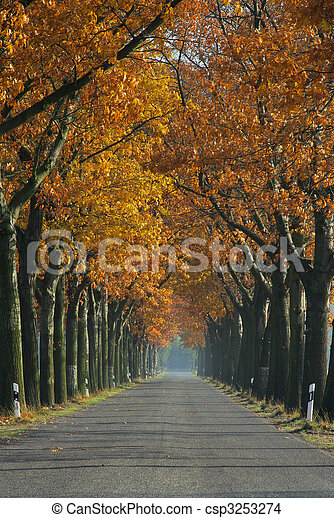 avenue in fall 06 - csp3253274