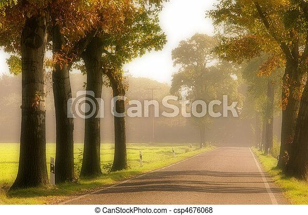 avenue in fall 16 - csp4676068