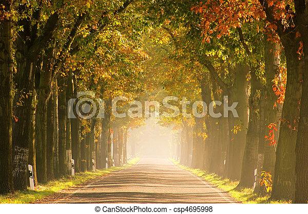 avenue in fall 18 - csp4695998