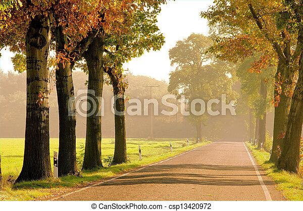 avenue in fall 20 - csp13420972