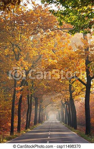 avenue in fall 24 - csp11498370