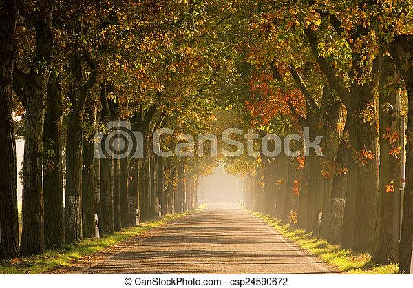 avenue in fall - csp24590672