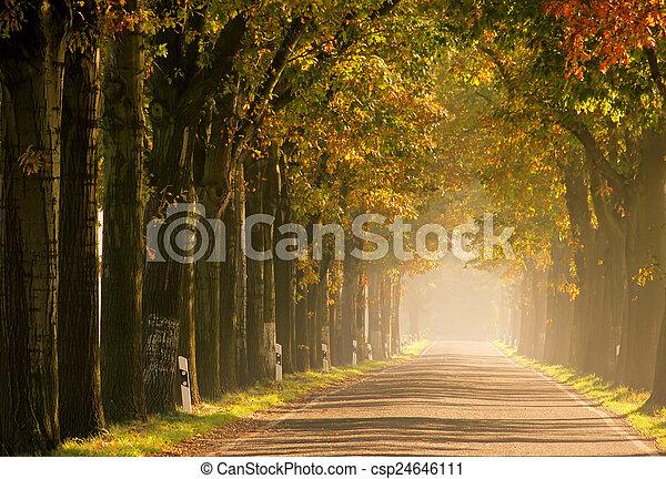 avenue in fall - csp24646111