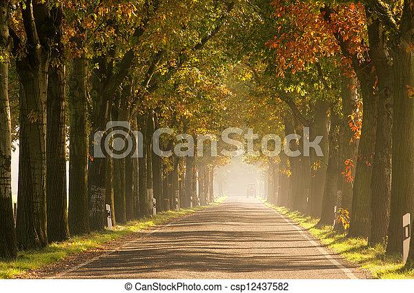 avenue in fall - csp12437582