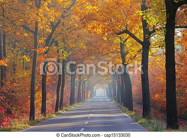 avenue in fall - csp15133030