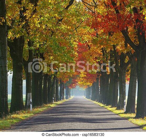 avenue in fall - csp16583130