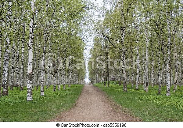 Avenue in park - csp5359196