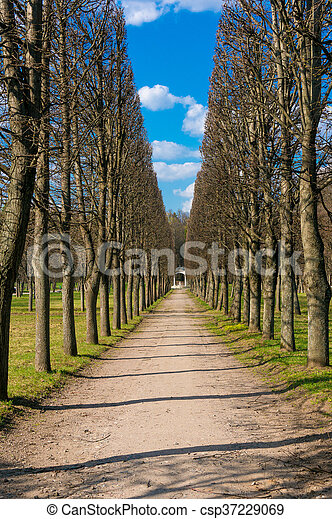avenue of trees in the park - csp37229069