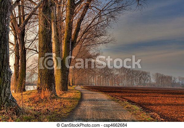 Avenue of trees - csp4662684