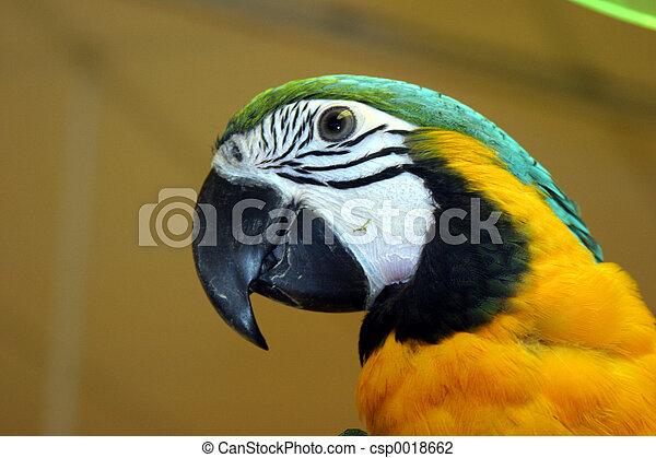 Pájaros número uno - csp0018662