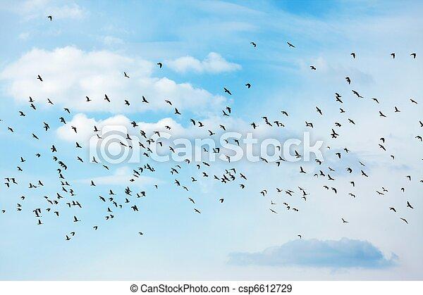 Pájaros - csp6612729