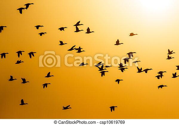 Pájaros - csp10619769