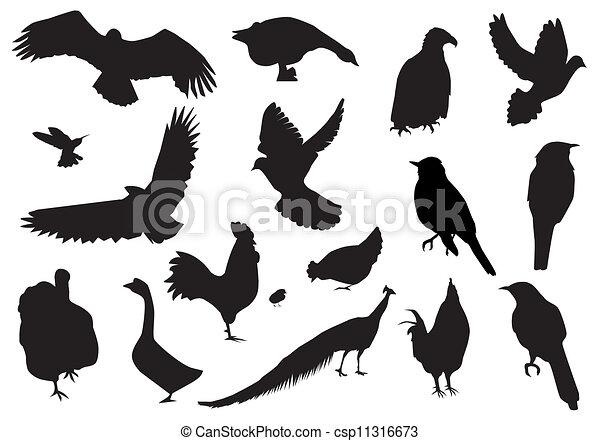 Pájaros - csp11316673