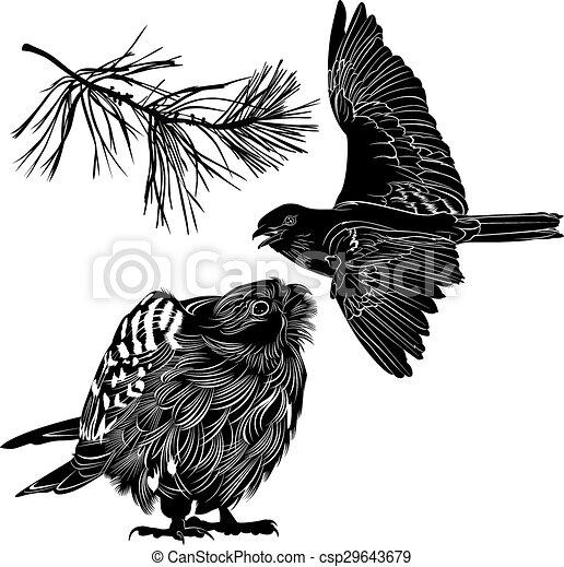 Pájaros - csp29643679