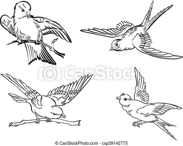 Pájaros - csp39142773