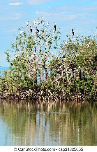 Pájaros migratorios - csp31325055