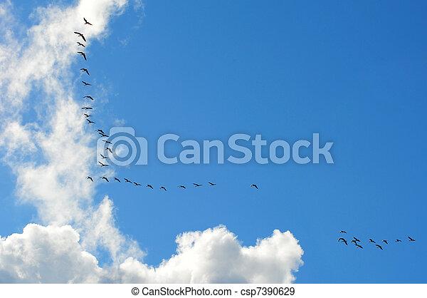 Pájaros migratorios - csp7390629