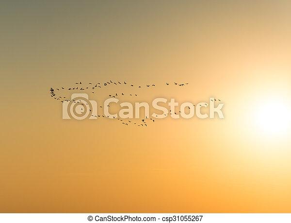 Pájaros migratorios - csp31055267