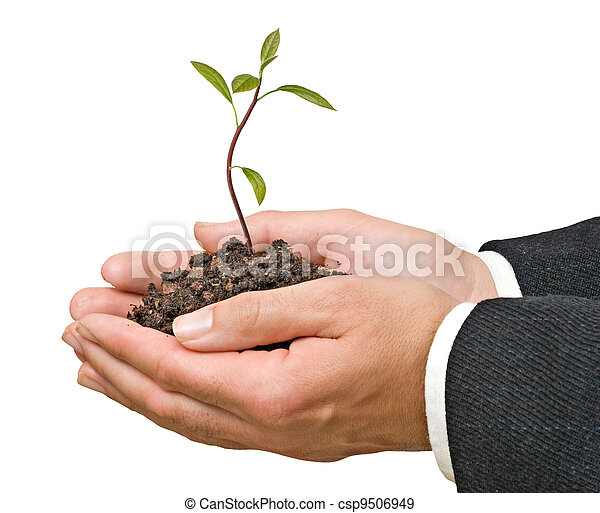 Avocado tree  in hands as a gift of agriculture    - csp9506949