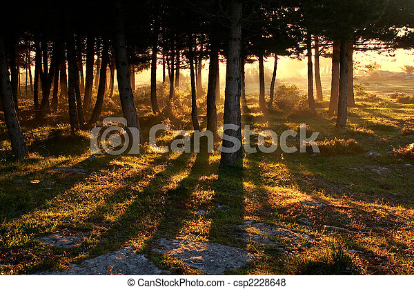 Awakening of day - csp2228648