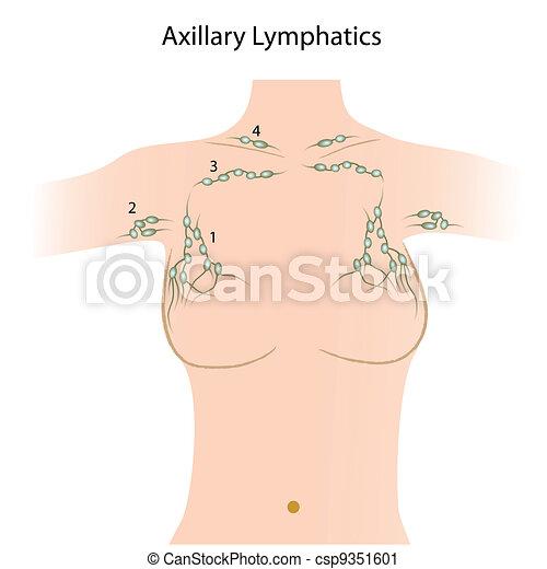 Axillary lymph nodes, esp8.