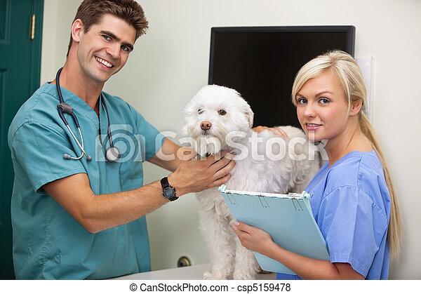 Ayudante, veterinario, perro, examinar, retrato imágenes - Buscar ...