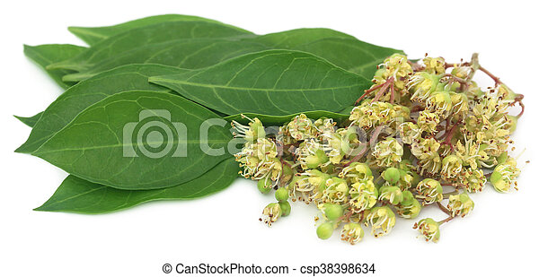 Ayurvedic Henna Flower With Leaves Over White Background
