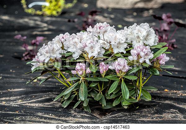 Azalea and barrier weed sheet - csp14517463